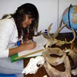 Can these bones help me learn about  different wildlife species?