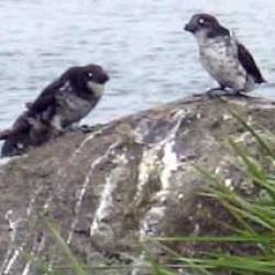 Island fauna