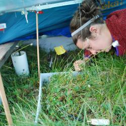 Elizabeth is point framing under a tent.