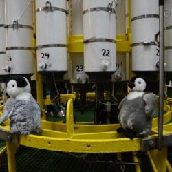 Penguins on board the Palmer