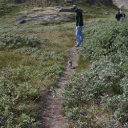 Arctic hare follows us!
