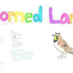 Horned Lark Species Journal