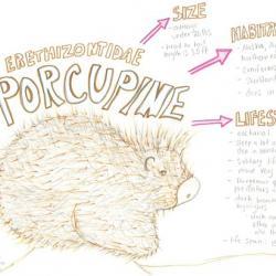 porcupine species journal