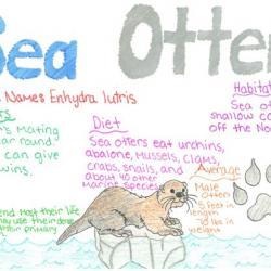Sea otter species journal
