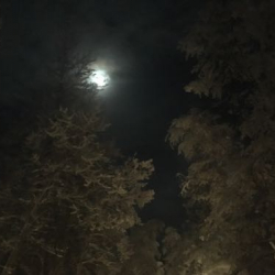 Moon at Chena Hot Springs