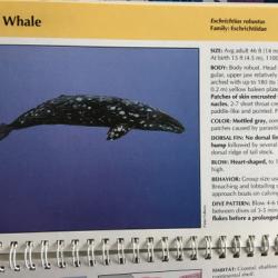 Whale id
