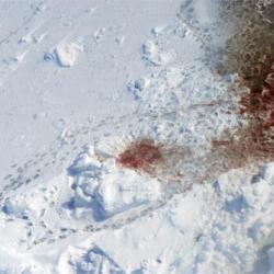 Polar Bear Kill