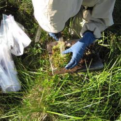 Measuring soil sample.