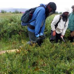 Probing Soil