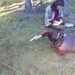 Measuring plant height in a phenology plot