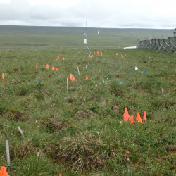 Flags at Tussock Snowfence site