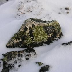 Tundra rock  winter